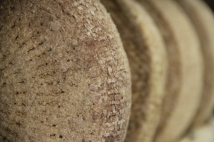 Aged wheels of raw milk cheese - Elk Mtn by Pholia Farm