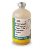 enterotoxemia toxoid